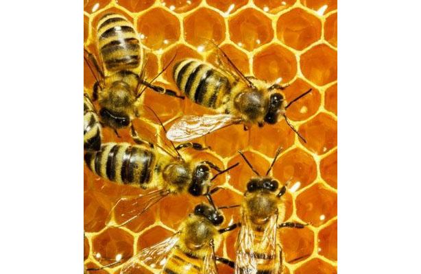 photo- bees