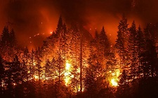 color photo: forest on fire
